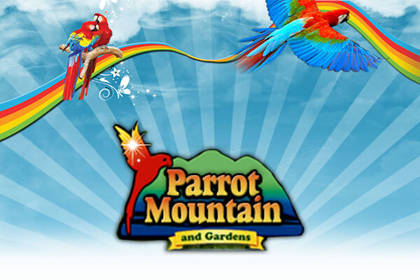 parrot mountain photo artwork