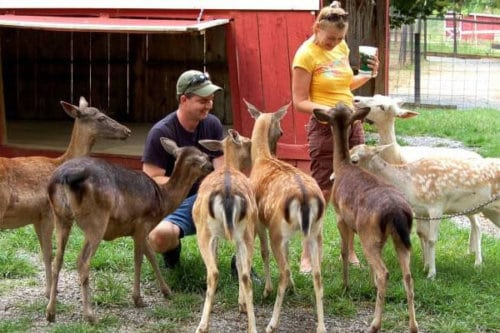 Smoky Mountain Deer Farm