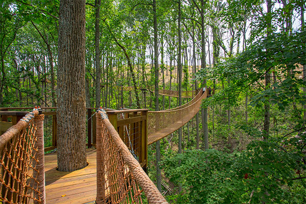 tree top canopy walk anakeesta gatlinburg tennessee
