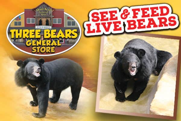 Feed live bears at Three Bears General Store